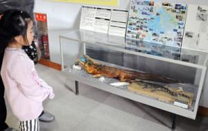 並べて展示されているワニの剥製。右手前が昨年11月に見つかったワニ=10日、瀬戸内町立図書館・郷土館