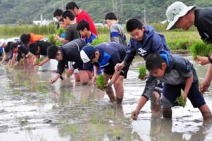 足首まで泥に漬かって田植えに取り組む小、中学生ら=15日、龍郷町秋名