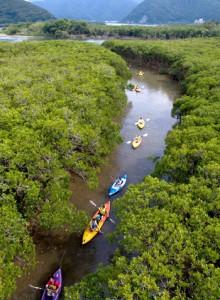 マングローブ内の景色をカヌーで楽しむツアー客=28日、奄美市住用町(本社小型無人機で撮影)