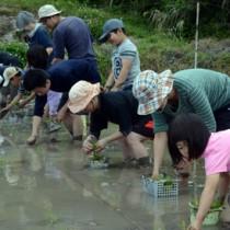 一列に並んで苗を植える参加者=1日、奄美市名瀬芦花部