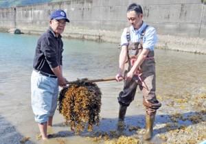 与論町漁協に提供するために藻が付着した造成用ブロックを回収する関係者=20日、奄美市住用町の戸玉漁港