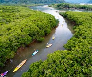 マングローブでカヌーを楽しむ観光客ら=4月28日、奄美市住用町のマングローブパーク(本社小型無人機で撮影)