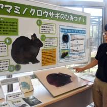 アマミノクロウサギの生態を紹介したパネル展=10日、鹿児島市の平川動物公園
