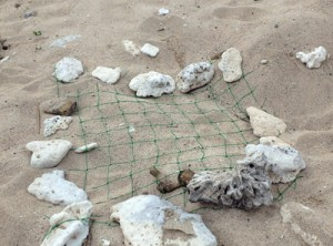 卵を守るためウミガメの産卵巣にかぶせられた網=2017年5月、大和村戸円のヒエン浜(県自然保護課提供)