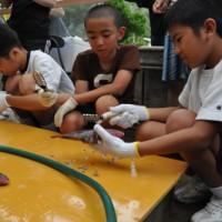 丁寧に魚をさばく児童生徒たち=17日、奄美市名瀬の芦花部小中学校