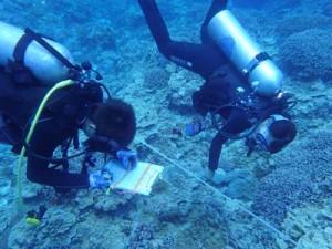 ボランティアダイバーらが参加したヨロン島リーフチェック=5月26日、与論島茶花沖(海の再生ネットワークよろん提供)