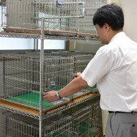 7月に運用を開始する奄美ノネコセンターの収容室=20日、奄美市名瀬