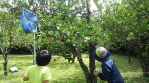虫取り網を手にゴマダラカミキリムシの幼虫を探す子ども=3日、喜界町(同町提供)