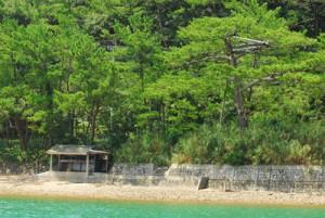 海から見たかつての漁場。右の松の樹上に旧見張り台がある(宇検村提供)