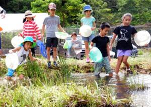 夢中になって生き物を探す子どもたち=29日、奄美市の大川ダムビオトープ