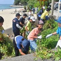 緊急対策外来種アメリカハマグルマの防除活動に取り組む奄美こども環境調査隊の隊員ら=25日、奄美市名瀬の大浜海浜公園