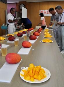 沖永良部島の生産者から17点の出品があったマンゴー品評会=30日、知名町商工会館