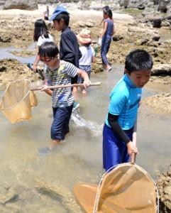 海岸の岩場などに隠れた生き物を探す児童ら=26日、知名町瀬利覚のミチュイ海岸
