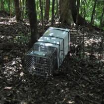 ノネコ捕獲のため山中に設置されたかごわな=17日、奄美大島(環境省奄美自然保護官事務所提供)