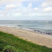 昨年に続き今年もウニが採れない奄美の海=5日、龍郷町