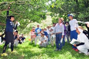 果樹の低木化によるメリットなどについて、現地学習会で理解を深める参加者=25日、奄美市名瀬の平井果樹園