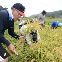 約30人が参加した市集落の稲刈り=12日、奄美市住用町市