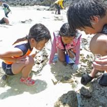 海辺の生き物を探す子どもたち=5日、喜界町小野津
