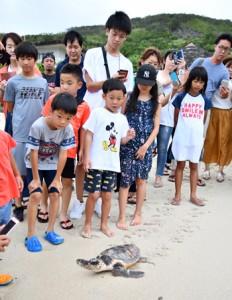 海に向かう子ガメを見守る子どもら=15日、奄美市名瀬の大浜海浜公園