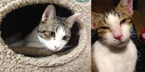 市内で保護された子猫(右)と1年半後の様子(提供写真)