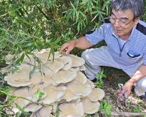畑で見つかった巨大キノコ=23日、徳之島町亀津
