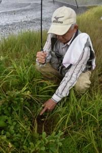 ダイサギソウの約10株が根こそぎ盗掘された現場=24日、奄美市名瀬