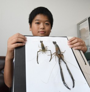 琉伸君が捕まえた大物タナガ(右)。左は一般的と思われるサイズ=2日、奄美市名瀬の南海日日新聞社