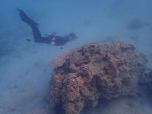 サンゴの生息状況を確認する調査=14日、龍郷町の倉崎海岸