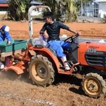 実証栽培に向け、バレイショを植え付ける徳之島高校生物生産系列の生徒ら=22日、伊仙町伊仙