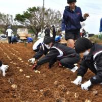 ユリの球根を植え付ける、えらぶゆりサポーターら=14日、和泊町喜美留の笠石海浜公園