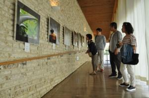 奄美を捉えた作品に見入る来館者=1日、奄美市笠利町の田中一村記念美術館