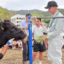黒牛への餌やり体験もあった食育出前授業=1日、古仁屋小学校