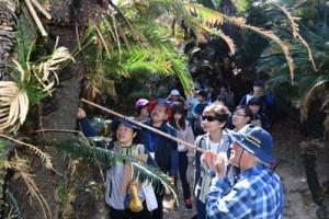 徳之島FAMトリップでソテツトンネルを訪れた参加者=11日、徳之島町の金見集落