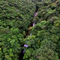 政府が世界自然遺産登録への再推薦を決定した奄美・沖縄の森=2017年9月、奄美大島