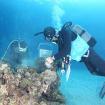 サンゴを岩に固定させるメンバーら=27日、龍郷町(提供写真)