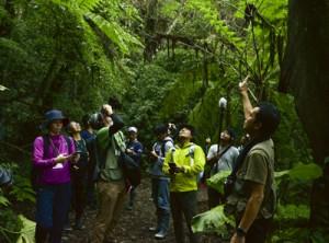 世界自然遺産候補地の金作原国有林を視察した鹿児島、沖縄両県のエコツアーガイドら=15日、奄美市名瀬