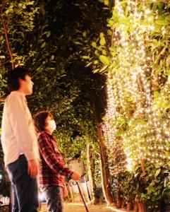 集落のフクギ並木を彩る「ふくぎナイト」=21日、大和村国直