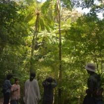 奄美大島を代表する自然観察スポットとして多くの人が訪れる金作原=奄美大島