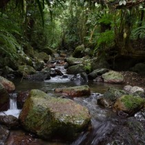 多様な生命を育む照葉樹の森=奄美大島