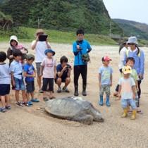 追跡調査のため発信機を付けたウミガメの放流(奄美海洋生物研究会提供)