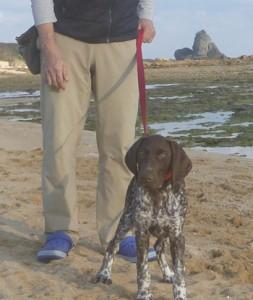 環境省が奄美大島のマングース探索犬として加えた探索犬のピピ(提供写真)