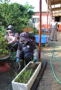 親孝行代行サービスで、庭の手入れをする和泊町シルバー人材センターの会員ら=14日、同町国頭