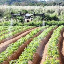 農薬を散布する産業用ドローン=2018年12月15日、徳之島町亀津