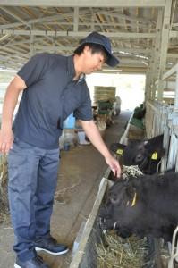 餌をあげながら牛の表情を見る川上栄地さん=与論町朝戸、18年10月26日