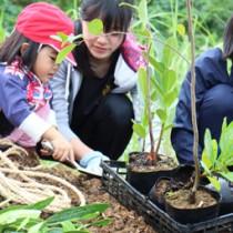 協力し合いながら植樹する参加者(提供写真)=16日、与論町多目的屋外運動場