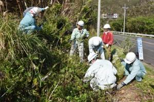 アメリカハマグルマの駆除作業に汗を流す参加者=19日、龍郷町赤尾木