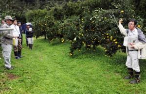 安定多収に向けた技術を学んだ瀬戸内かんきつ技術研究会の学習会=7日、奄美市住用町の松元果樹園