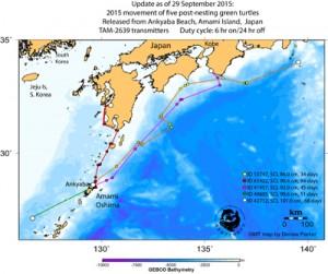 アオウミガメの回遊ルート(奄美海洋生物研究会提供)