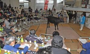 沖永良部家畜市場であった2019年子牛初競り=8日、和泊町