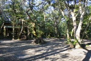 奄美自然観察の森、再整備進む 龍郷町